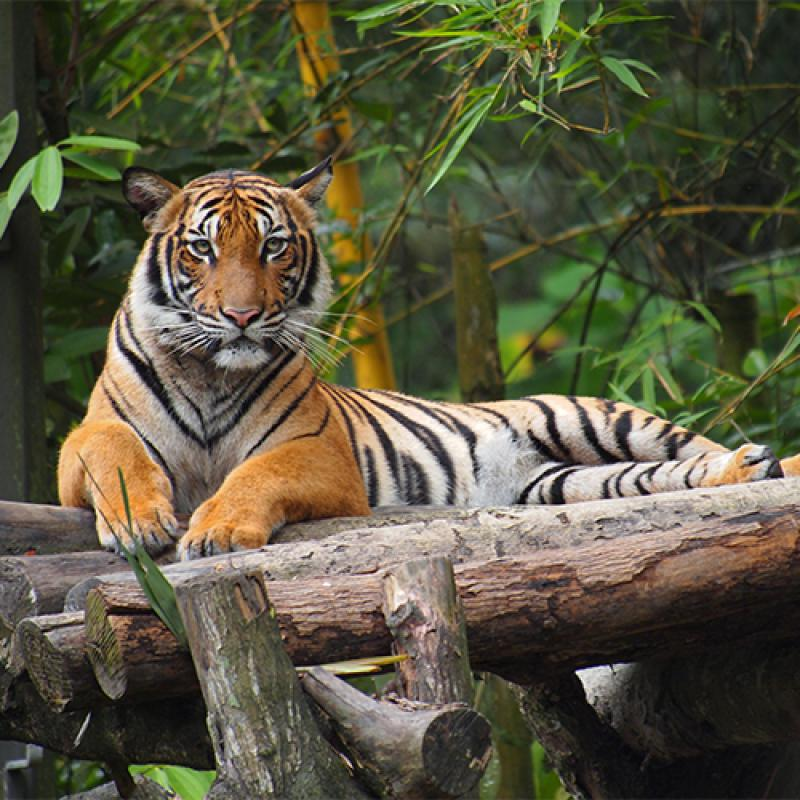 Zoo Taiping (38.7km from hotel)